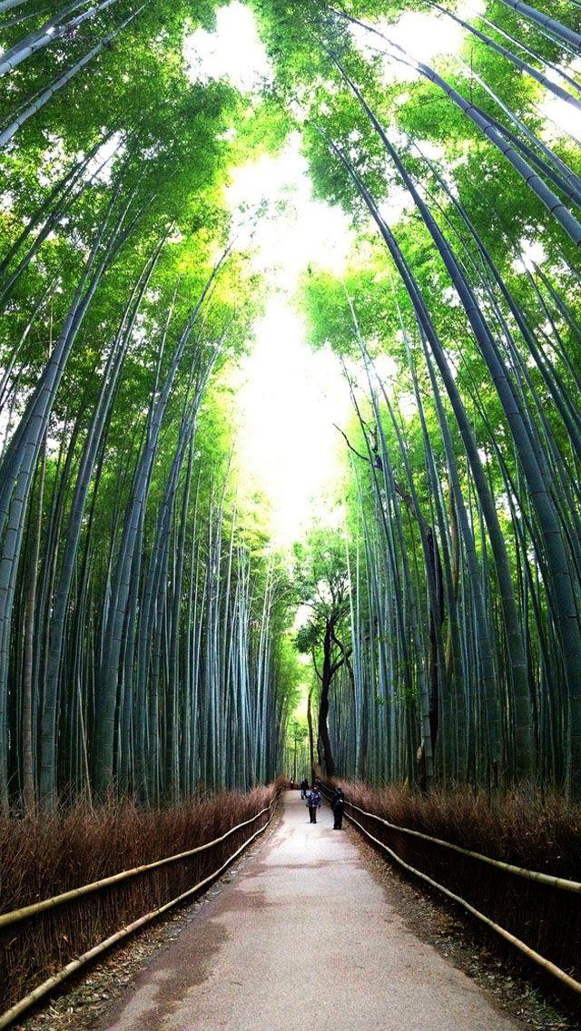 Bamboo Forest Iphone Wallpapers 行ってみたい場所 場所