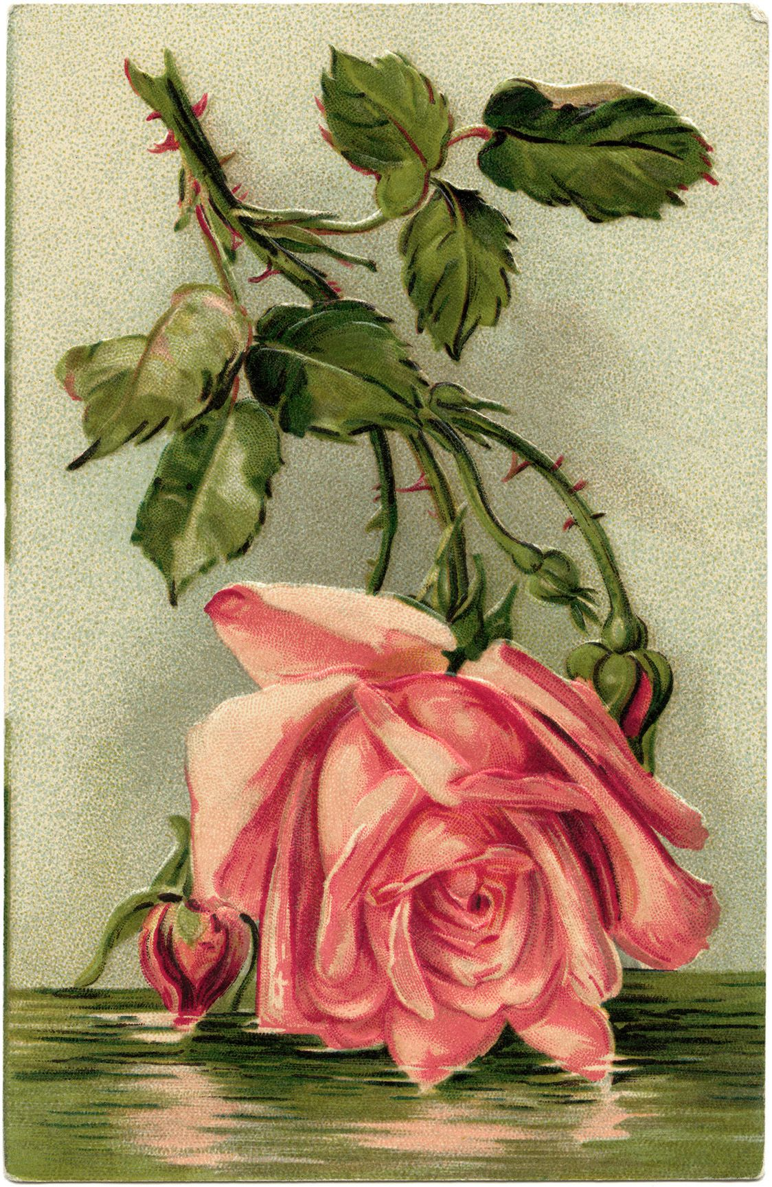 Victorian postcard graphics vintage birthday postcard pink rose victorian postcard graphics vintage birthday postcard pink rose clip art old fashioned birthday card vintage flower illustration izmirmasajfo