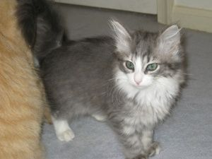 Adopt Willow Adopted On Petfinder Cat Quotes Funny Funny Cat Photos Funny Looking Cats