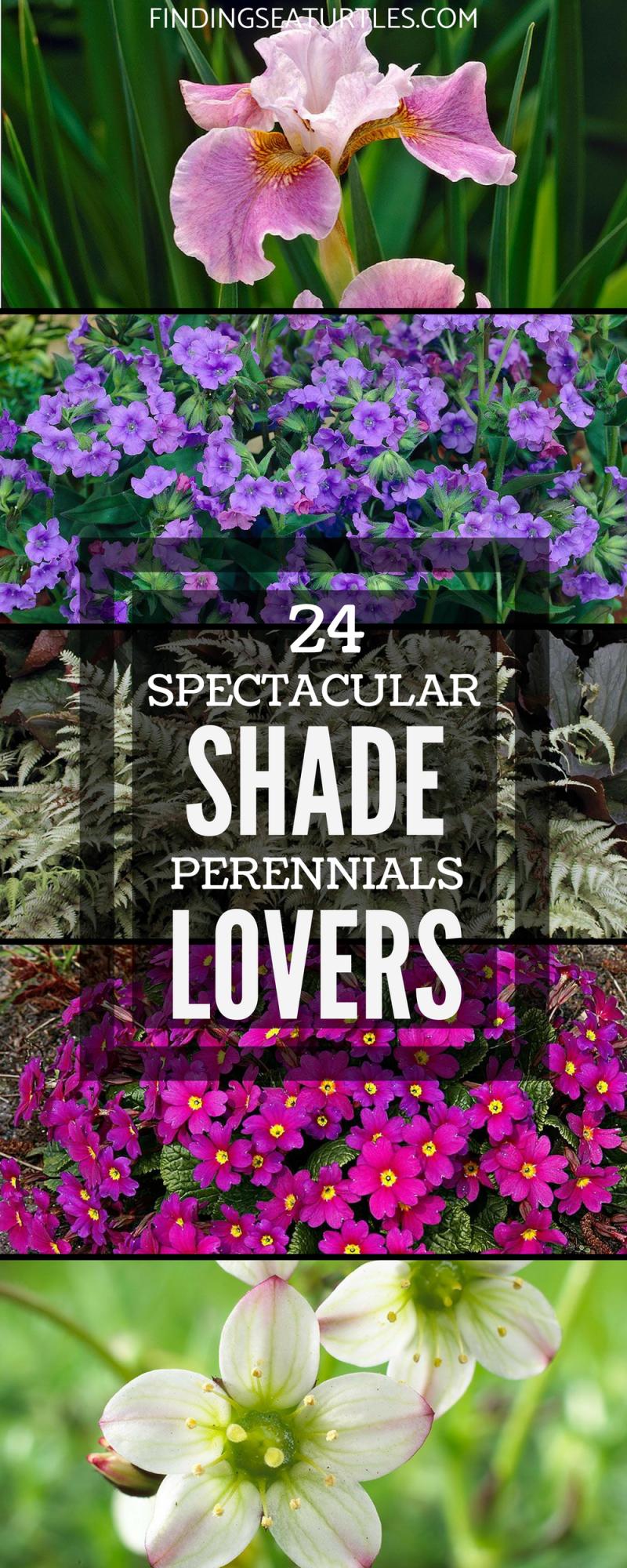 24 Spectacular Shade Garden Perennials - Finding Sea Turtles