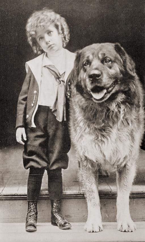 Early 1900's Leonberger