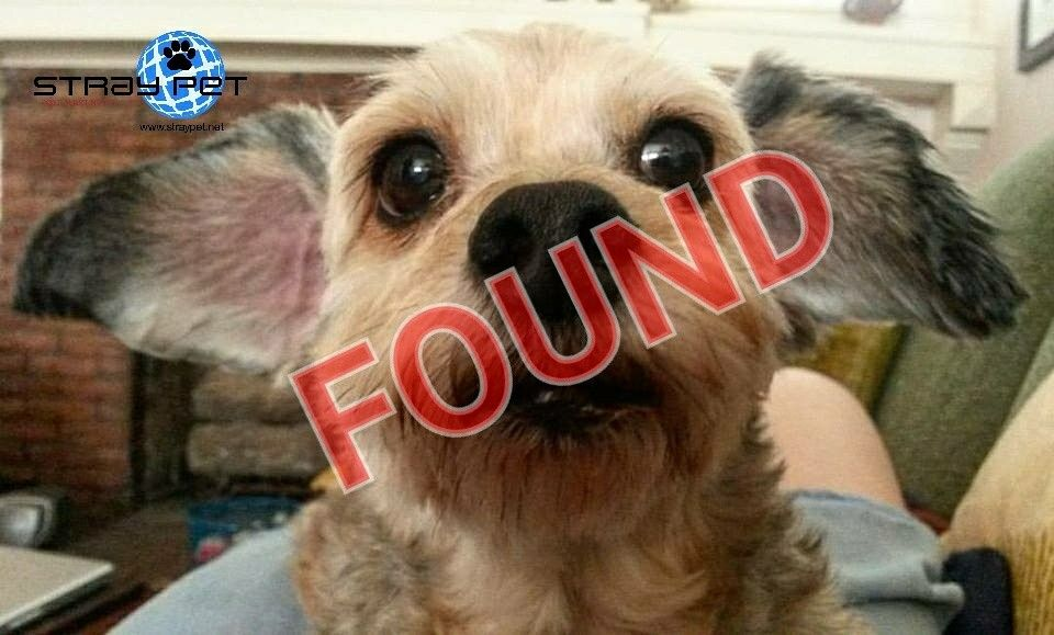 Alert Cancelled On Missing Terrier Mix San Antonio Tx 78212
