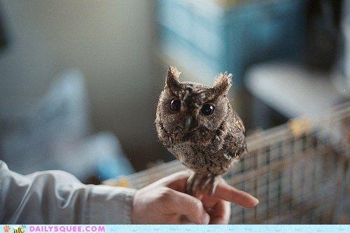Owlie baby