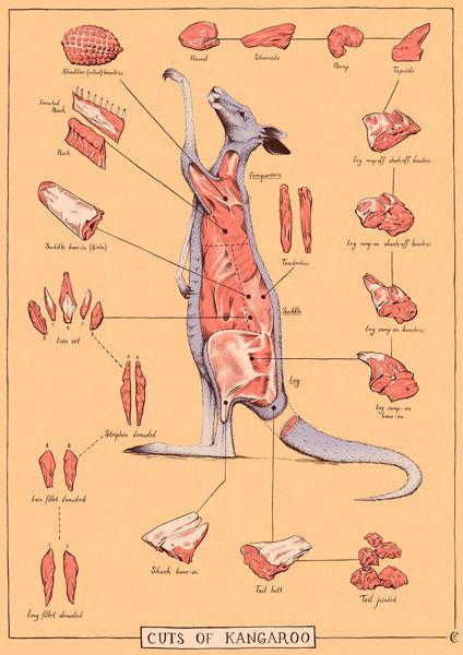 Pin On Kangaroos Nom Nom Nom