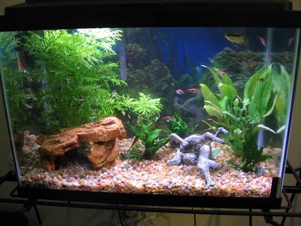 This 20 gallon planted tank has a rock formation and fake for 20 gallon fish tank size