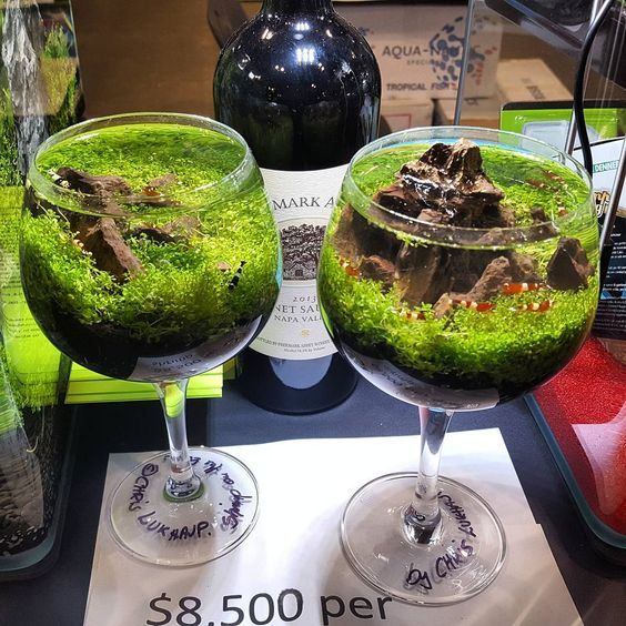 Pin by Navarro Edwards on Aquascapes   Indoor water garden ...