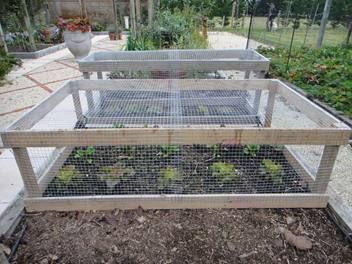 Vegetable Bed Covers Keep Critters Out Of The Garden Beds Greenhouses Veggie Gardens