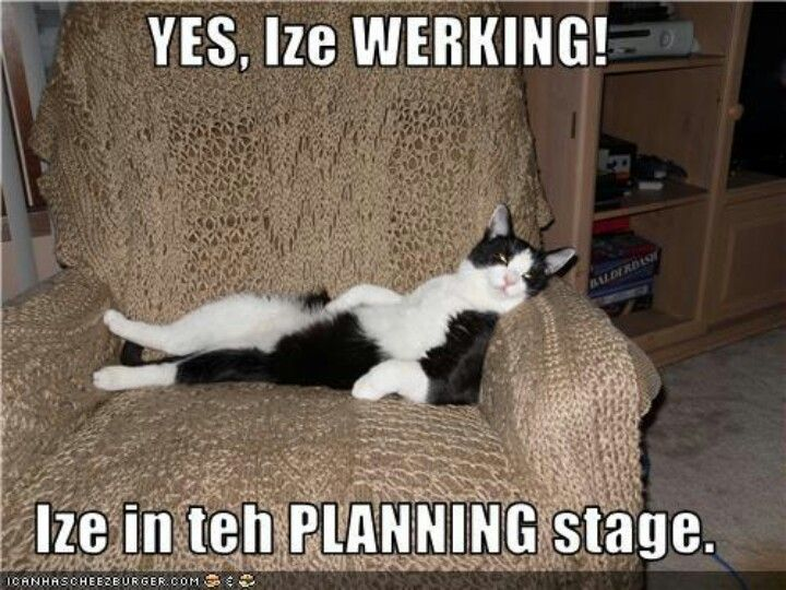 Funny Cat Meme About Work : Funny cat memes that will make you lol