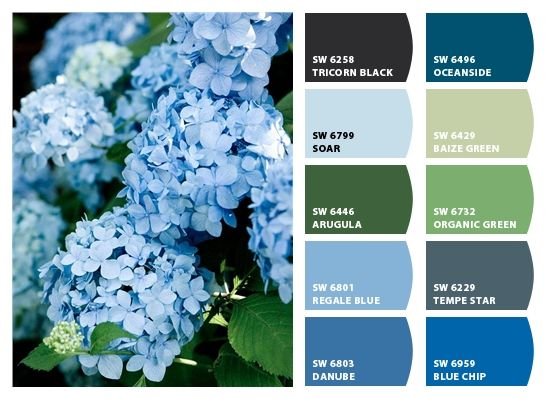 I Just Spotted The Perfect Colors Hydrangea Colors Blue Color Schemes Color Palette Design