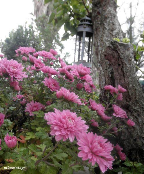 Los Mundos de Nika Vintage: Flores en otoño