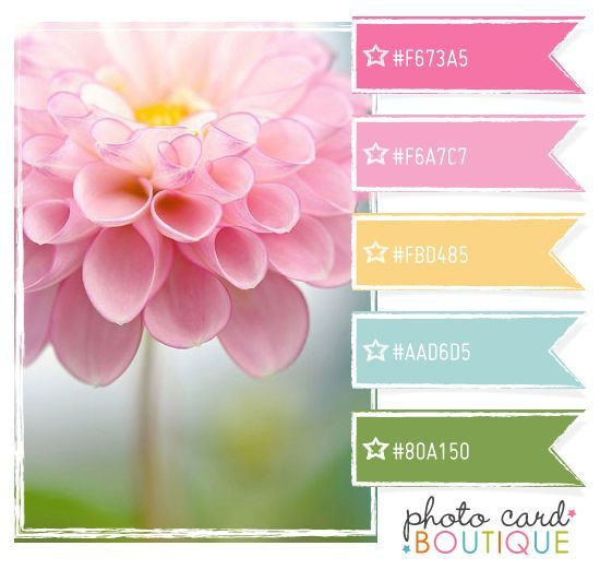 Bilderesultat for waffle flower color story