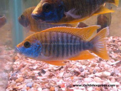 Pin Di Online Fish Browsing