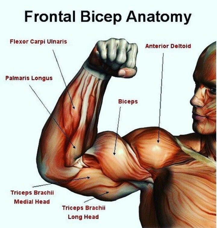 Pin by luke sammut on BODY PARTS | Pinterest | Biceps
