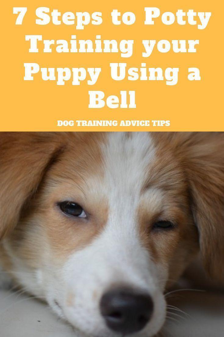 bell training puppy video