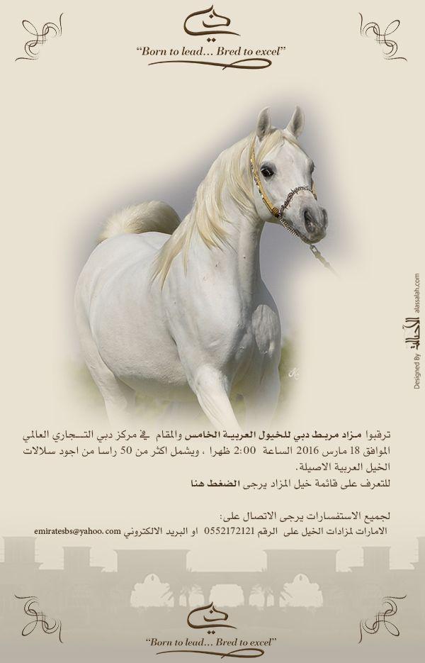 مزاد مربط دبي للخيول العربية الخامس