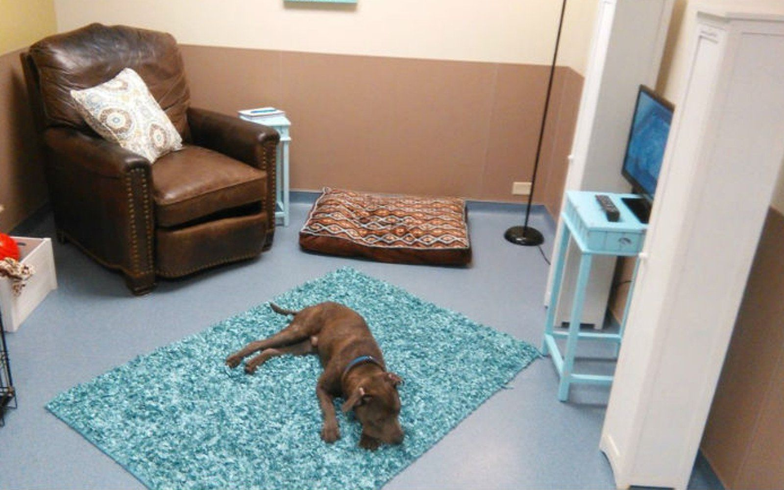 This Fantastic Animal Shelter Made a Special Room so Dogs