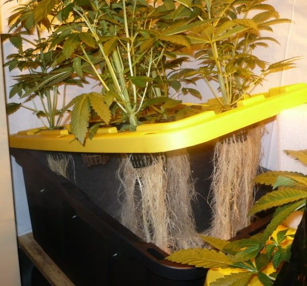 Aeroponics Diy Aquaponics Plants Aquaponics System 400 x 300