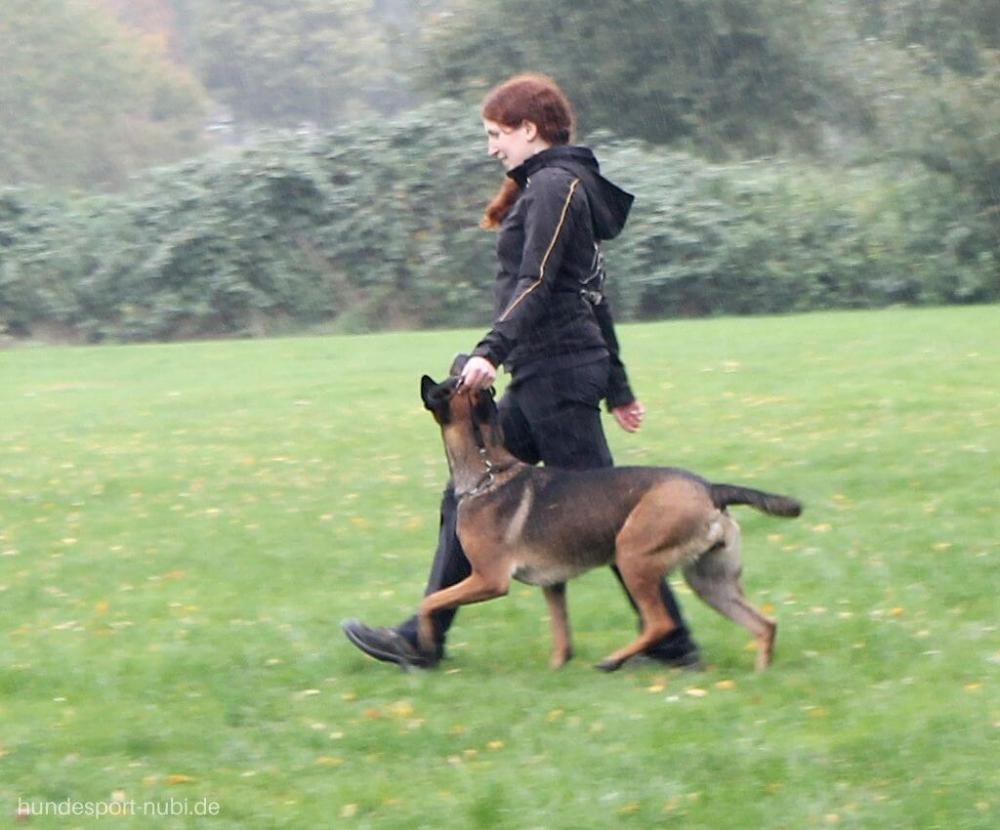 Vom Welpen Zum Begleithund Teil Zehn Hundesport Begleithund Hunde