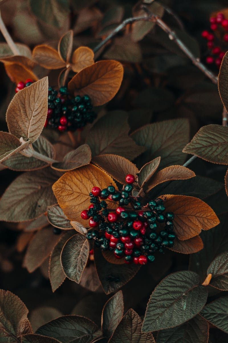 Brown And Green Leafed Plants Flower Phone Wallpaper Fruit Wallpaper Flower Wallpaper