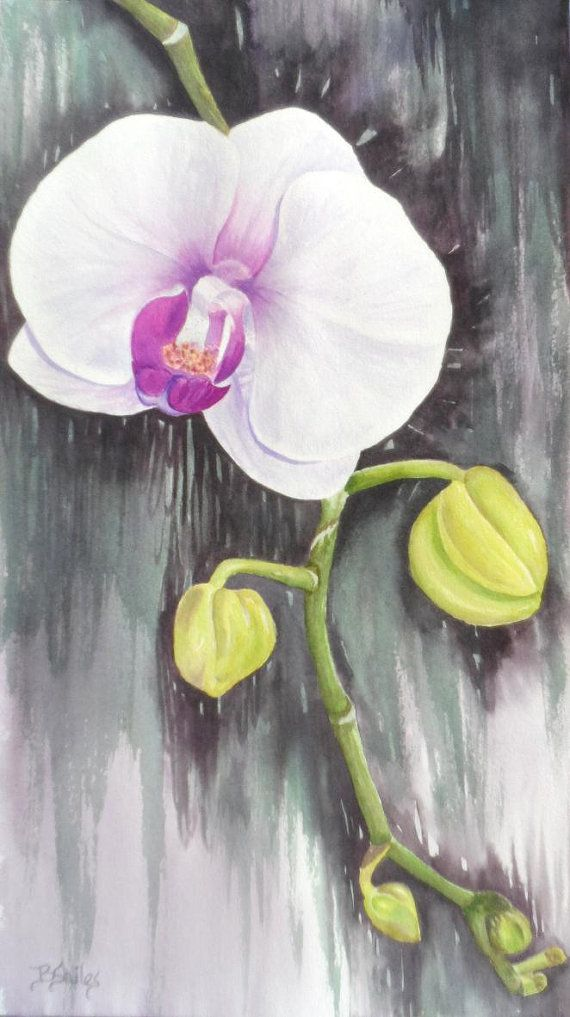 Limited Edition First Orchid In Watercolor By Paintingsbybecki