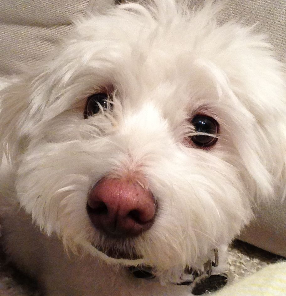 The Best Darn Dog in the World: COTON'S