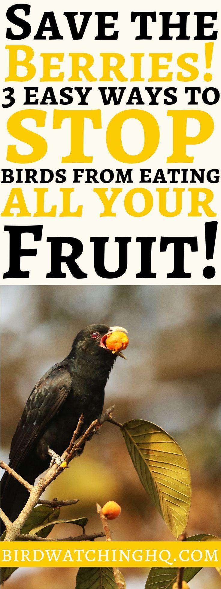Birds in the garden 10 proven tips to attract deter