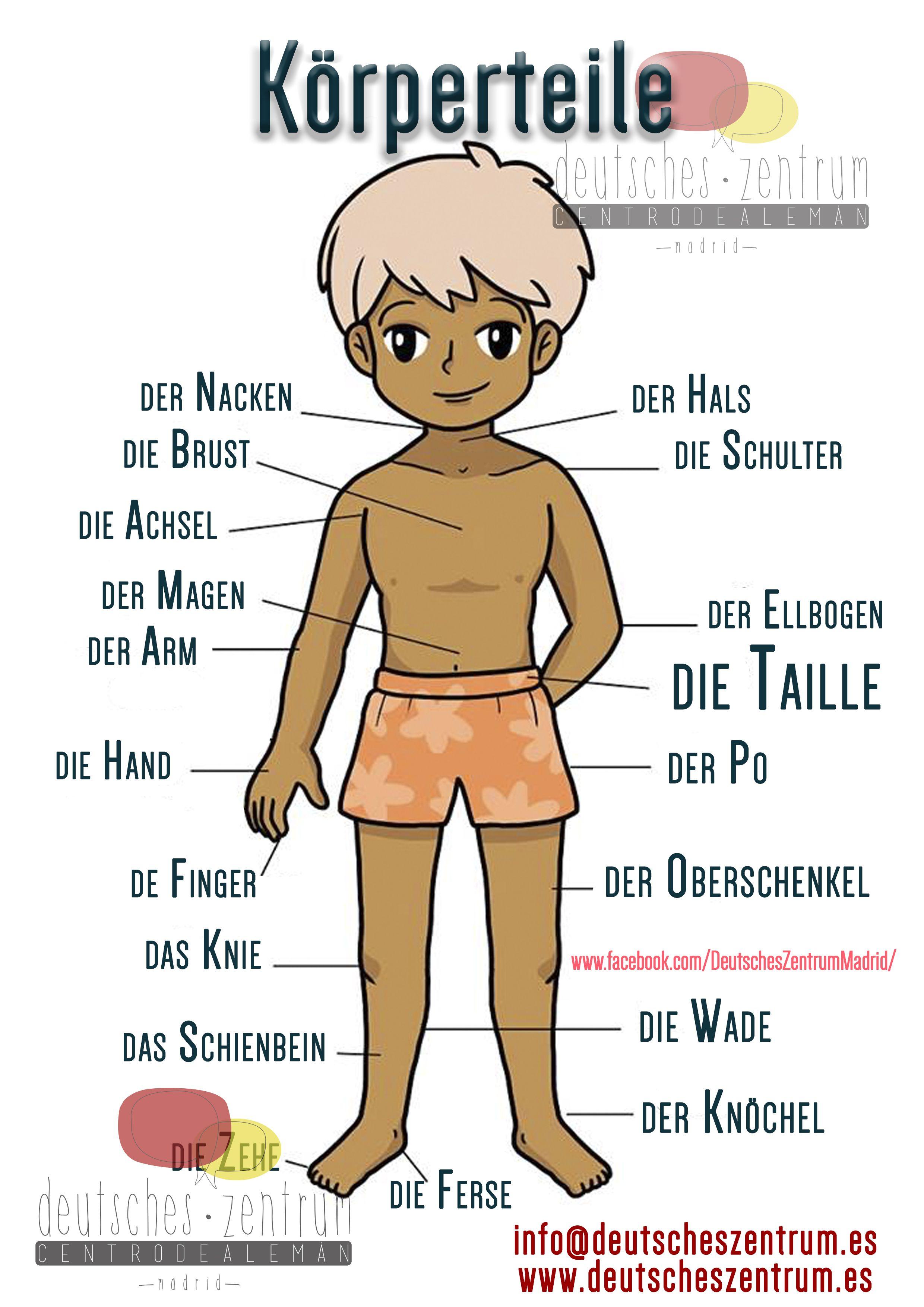 Körperteile Deutsch Wortschatz Grammatik Alemán German DAF ...
