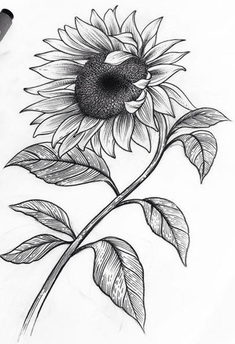 Flower Sunflower In 2020 Pencil Drawings Of Flowers Sunflower Drawing Sunflower Sketches