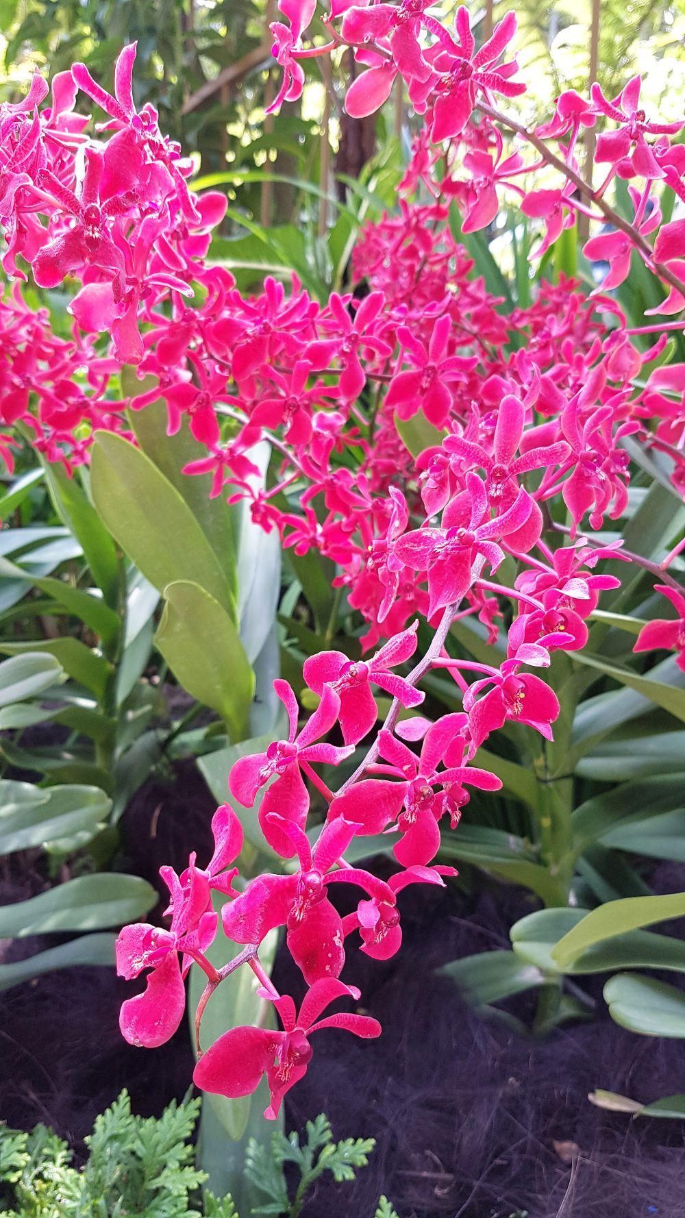 Le Jardin Aux Orchidees De Singapour Orchidee Joli Jardin Et