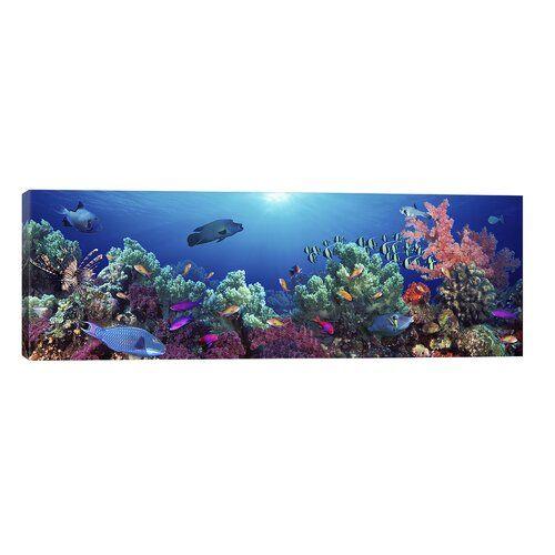Brayden Studio Leinwandbild Fischschwarm schwimmt in der Nähe eines Riffs, Indopazifik | Wayfair.de