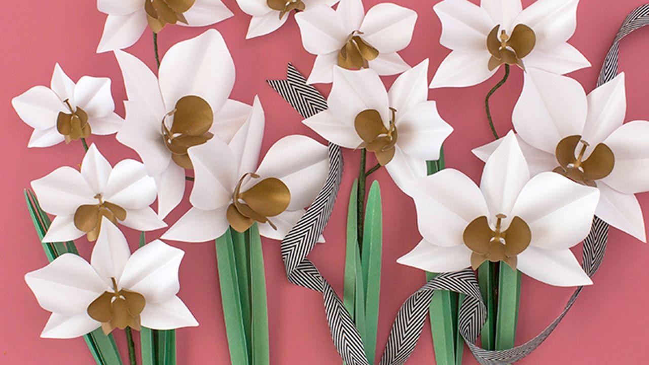 Make a paper flower cymbidium orchid plant paper flowers
