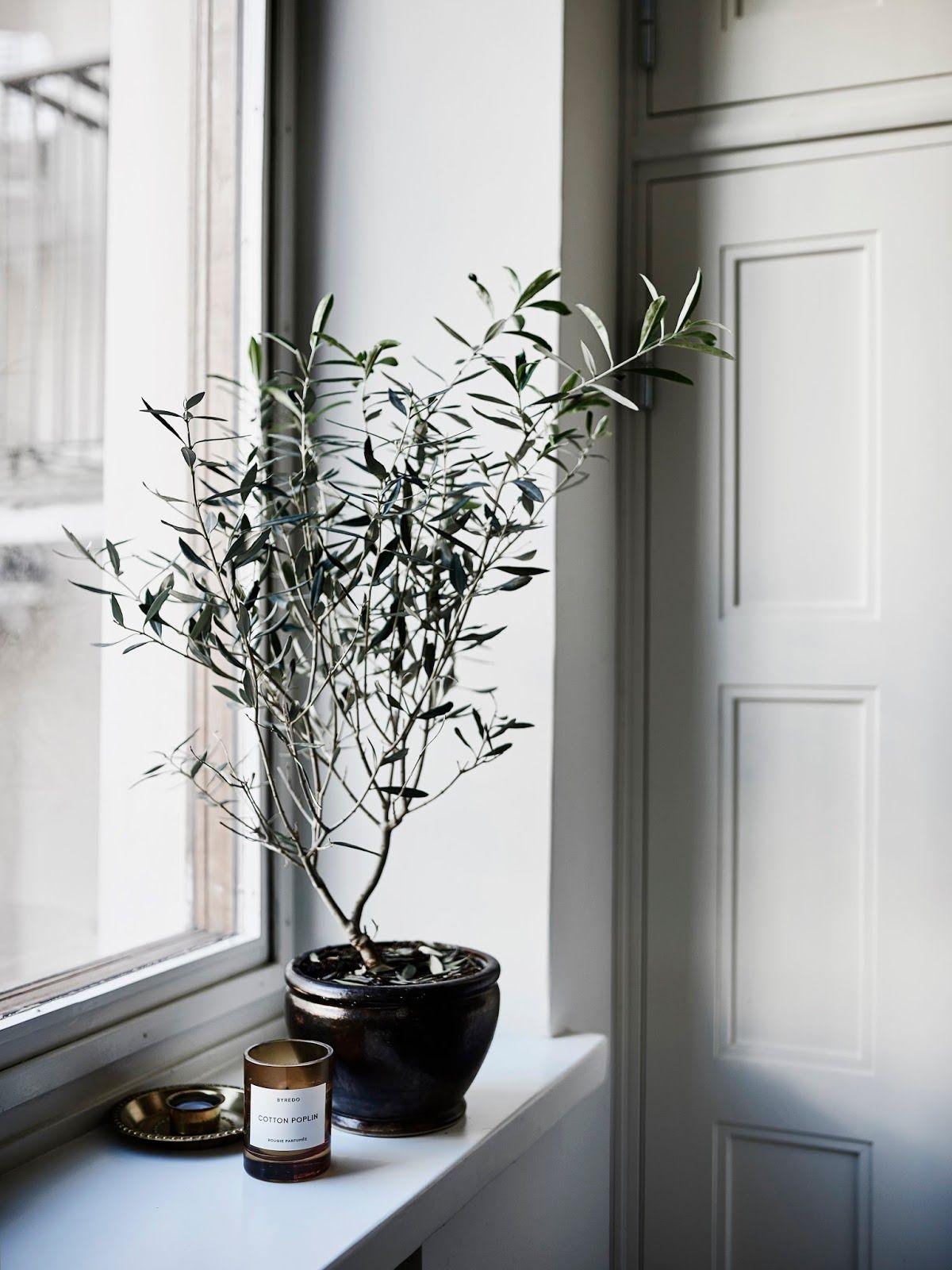 Olijfgroen is dé kleur voor een sfeervol interieur | Pinterest