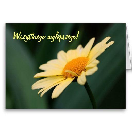 Polish Birthday Card Sto Lat Daisy Flower Photo Zazzle Com Daisy Flower Photos Flower Birthday Cards Flowers Photography