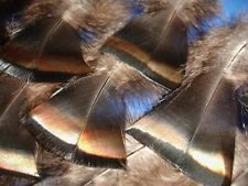 50 Large Flawless #1 Wild Turkey Breast Feathers - Great set - for Craft & Decor