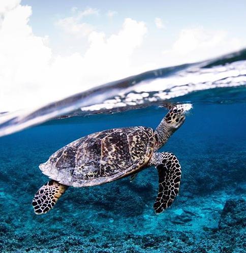 Turtle Love On Beach Love Australia Turtle Love Baby Sea Turtles Turtle