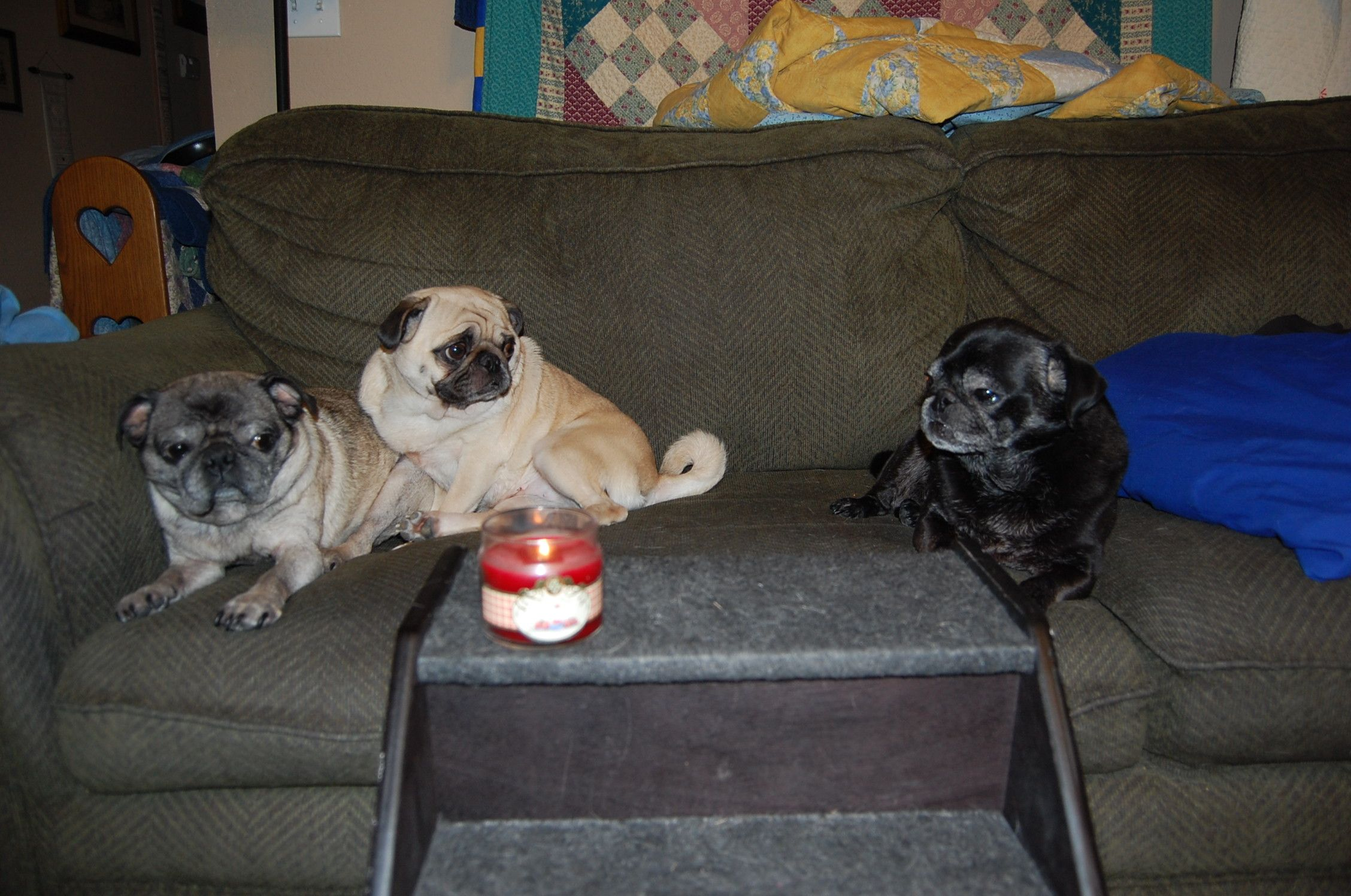 A candle is lit in ar for sweet gretchen pug hugs and kisses from