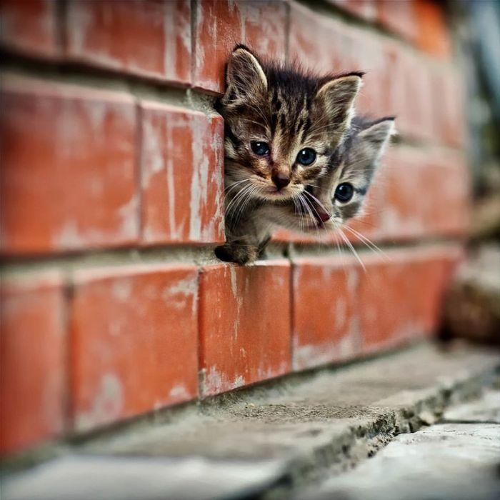 ¿Eres amante de los gatos? Visita mi blog