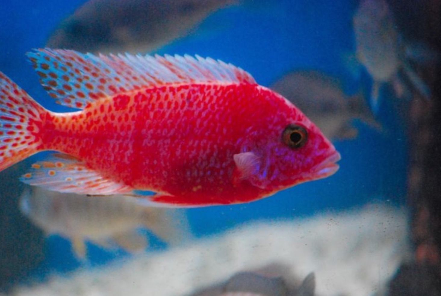 Aquarium Fish For Sale | Aquarium | Pinterest | Aquarium fish and ...