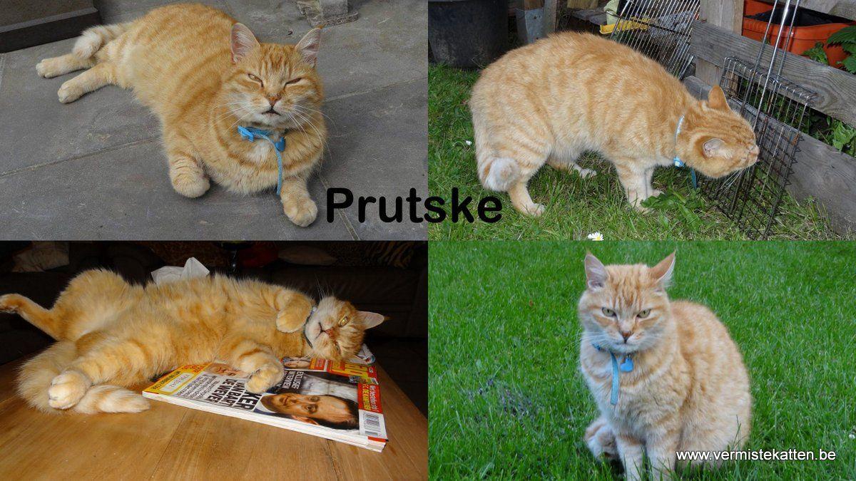 prutske2 Katten