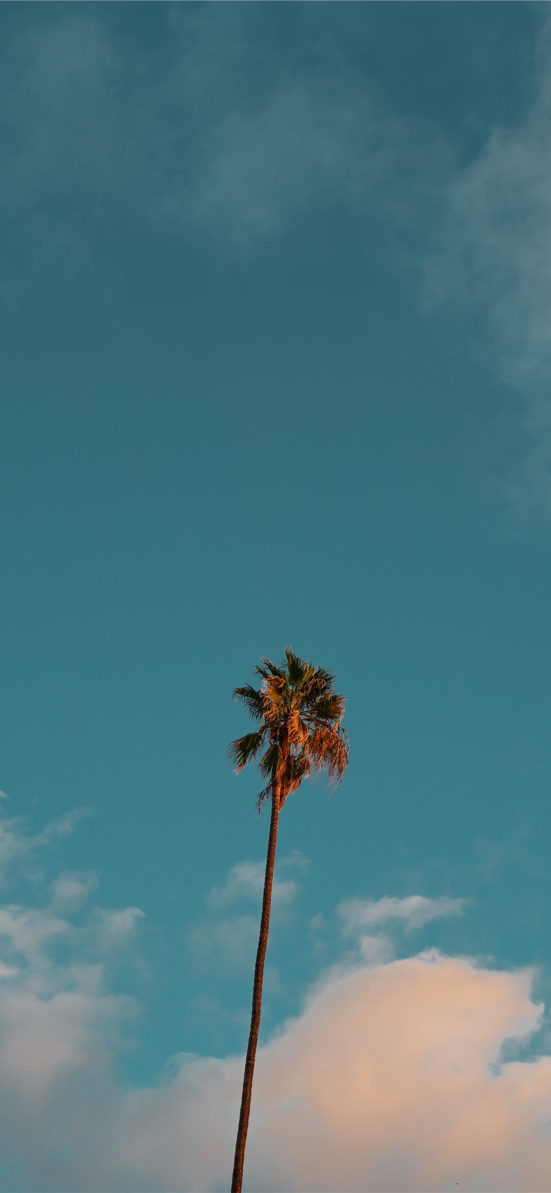 low angle photography of palm tree under blue sky iPhone X Wallpapers