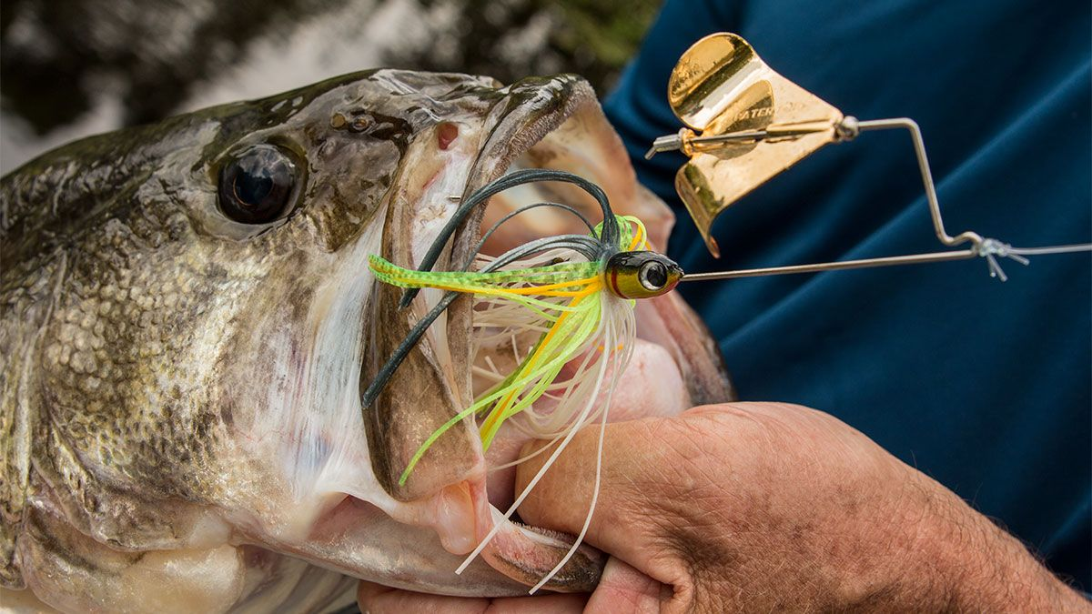 3 Ways To Catch Suspended Bass In Dirty Water