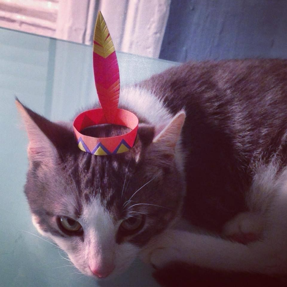 Cats Wearing Tiny Hats Cute Animal Pictures Kitten Cute Animals