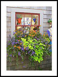 Sweet Potato Vine by Carole Rockman #shadecontainergardenideas