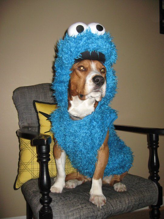 Cookiemonster Beagle Dog Sesame Street Pets Halloween