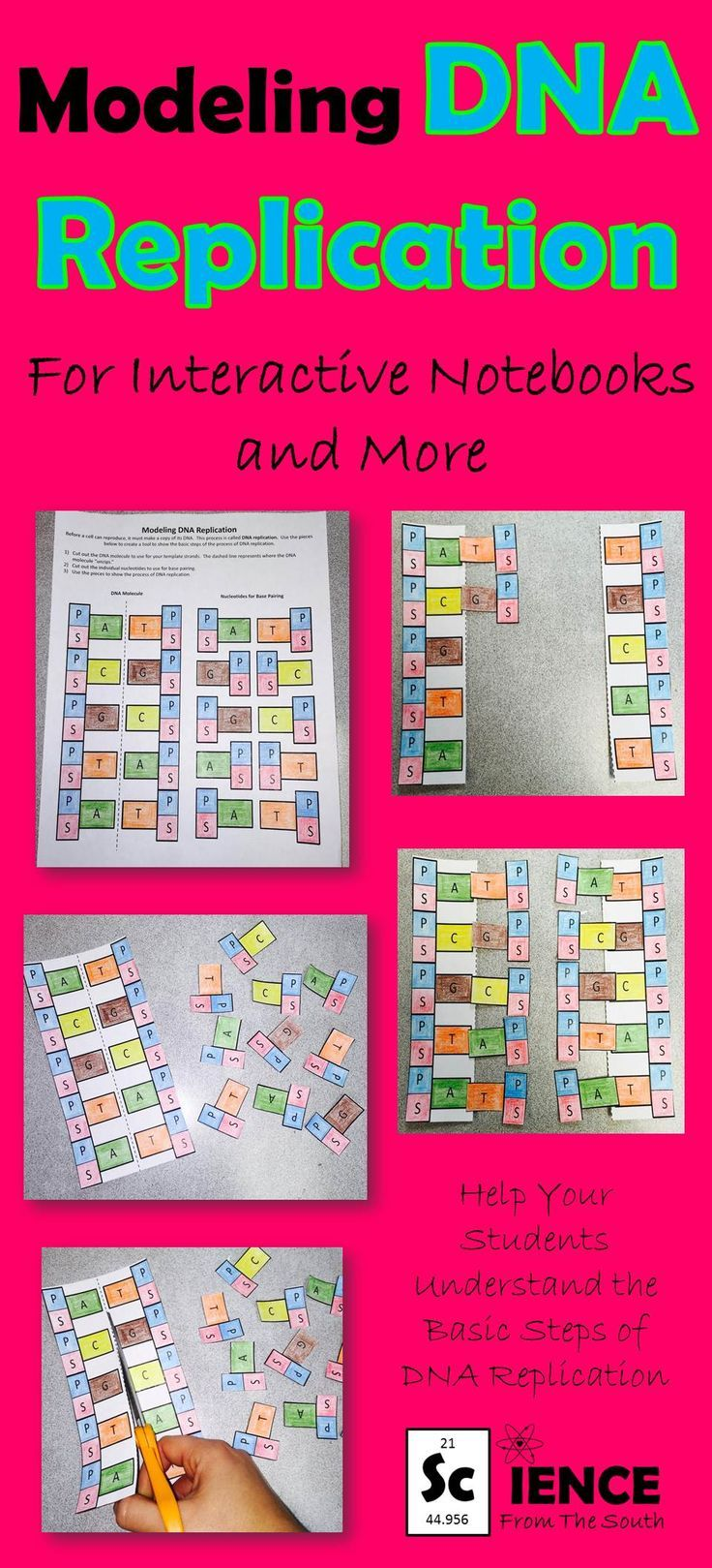 Modeling DNA Replication for Interactive Notebooks and