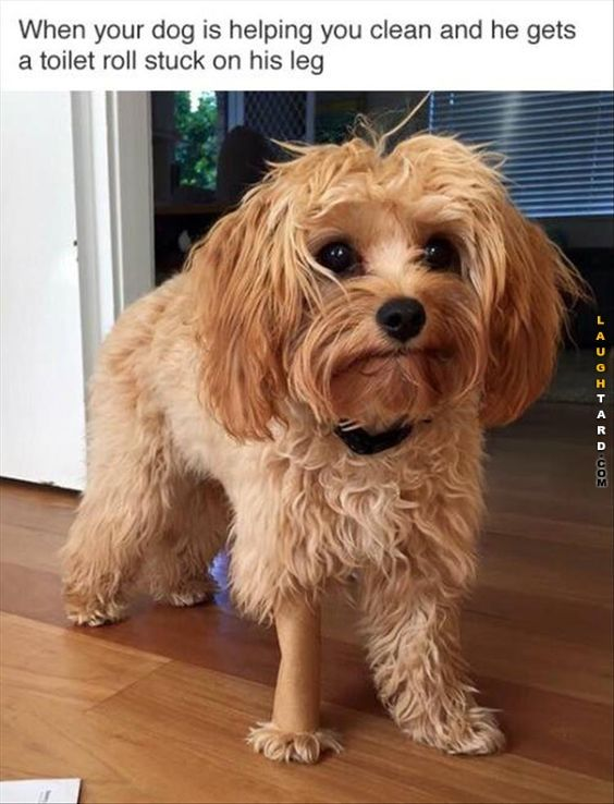 When Your Dog Is Helping You Clean Funny Animals Funny Animal Pictures Funny Dogs