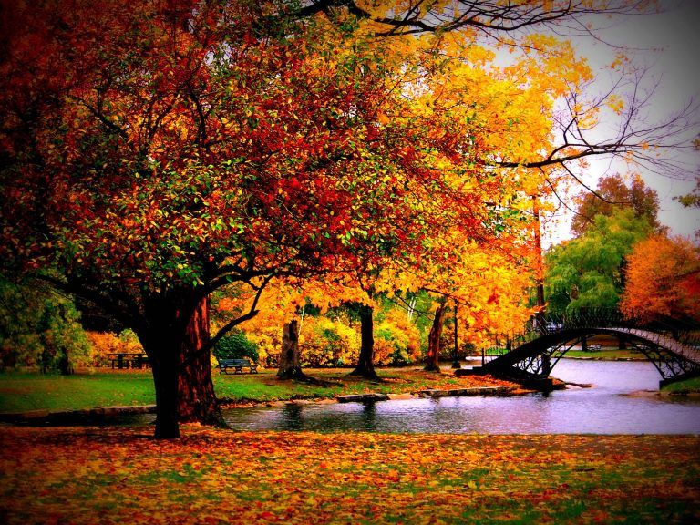 Free Download Fall Pictures Desktop Wallpaper Fall Scenery Wallpaper Fall Desktop Backgrounds