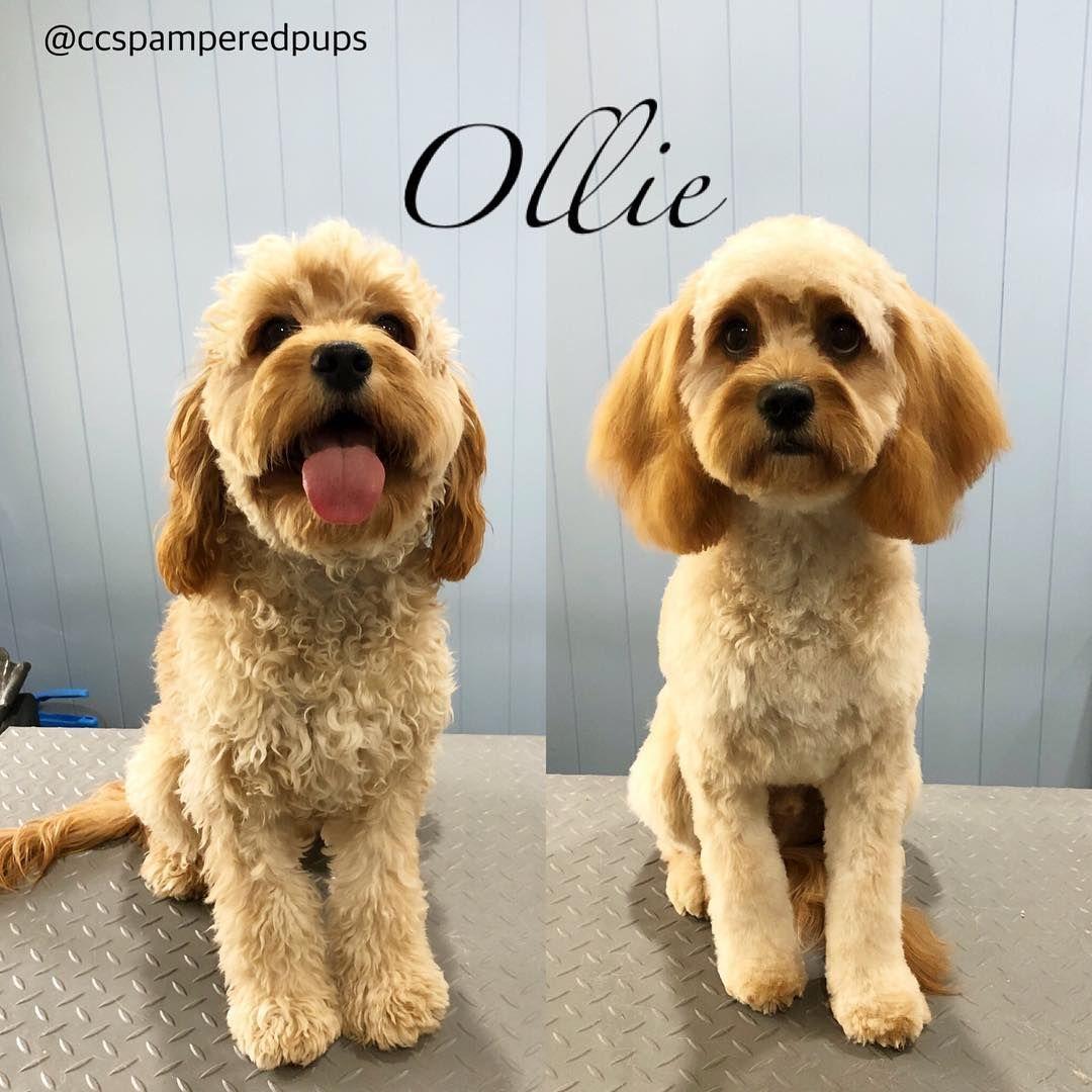 Ollie _______________________ Enquiries & bookings
