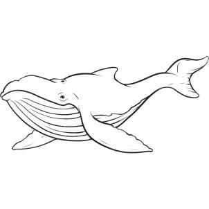 How To Draw A Whale By Dawn Animal Coloring Pages Whale