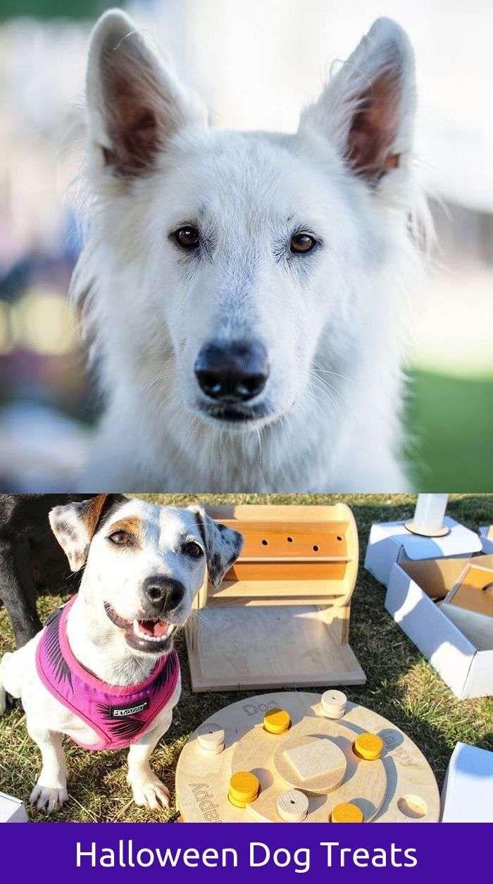 Reliable funny dog kennel names dog training barking walks